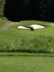 Golfing with the bears in Whistler